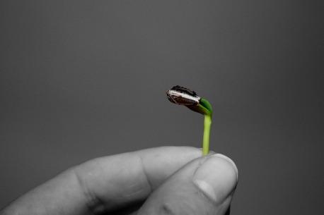 seedling hand